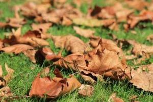 Rudeniniai lapai gyventojams kelia ne tik džiaugsmą, bet ir rūpesčių