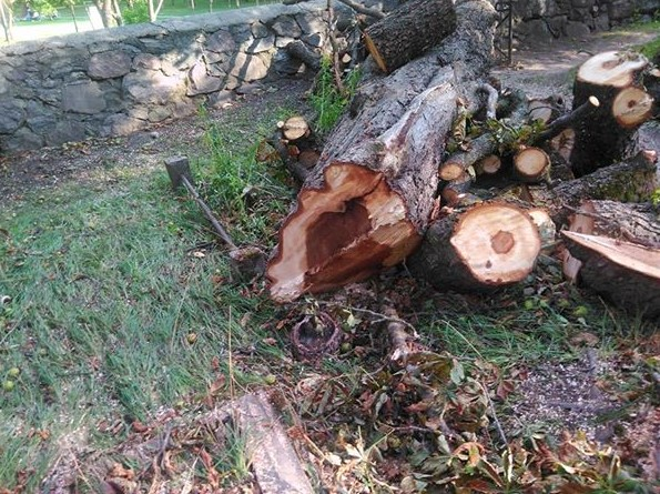 Iškirsti medžiai_kapinėse01