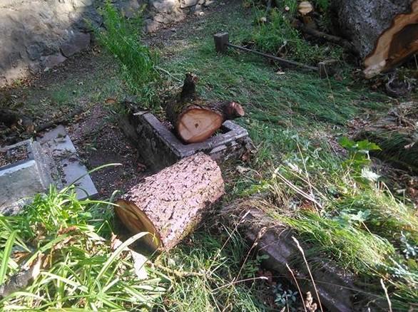 Iškirsti medžiai_kapinėse11