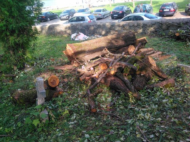 Iškirsti medžiai_kapinėse3